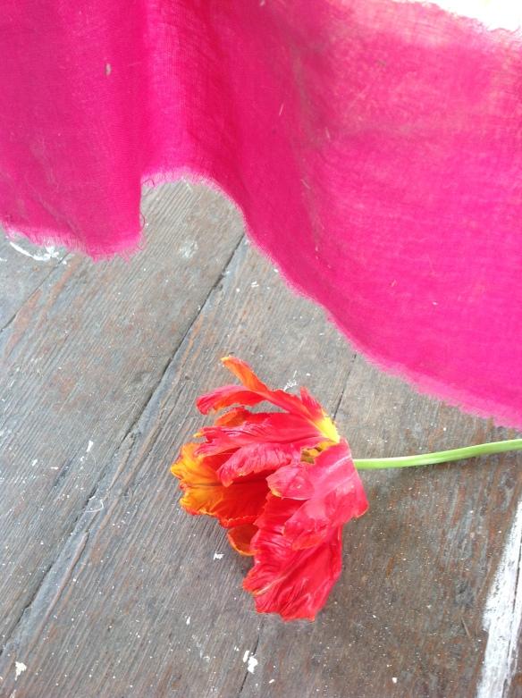 susi bancroft tulip 1
