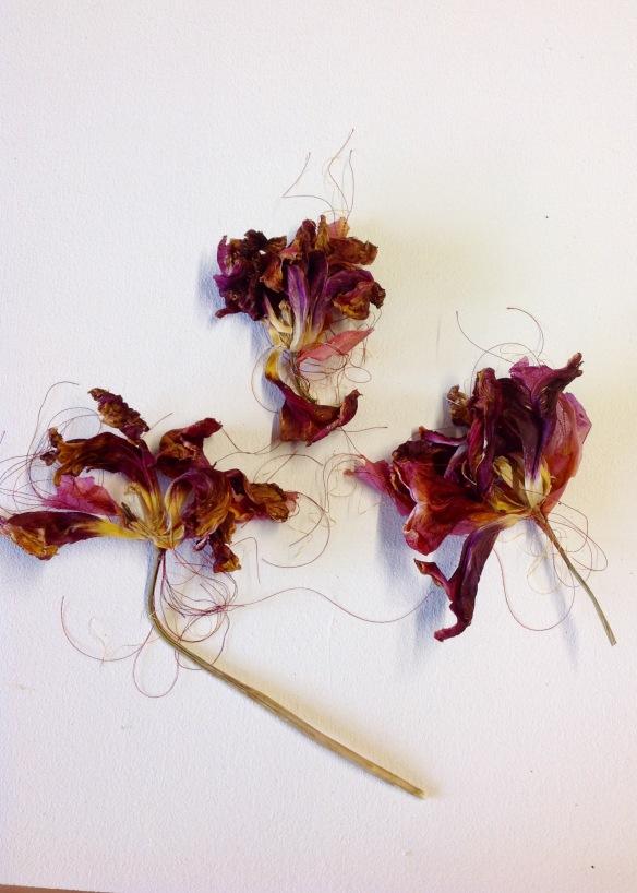 susi bancroft tulip stitch